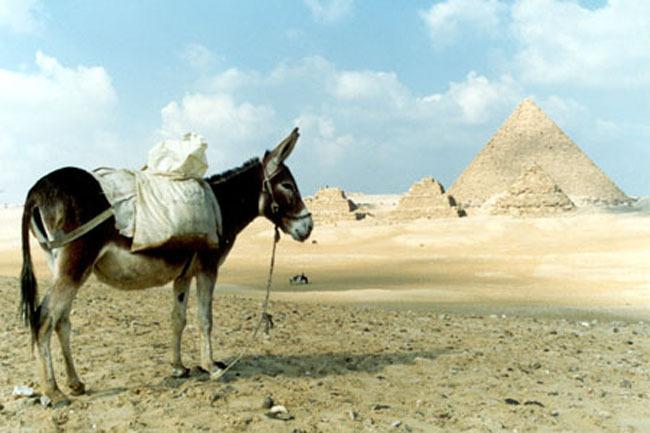 cairo_donkey_pyramid