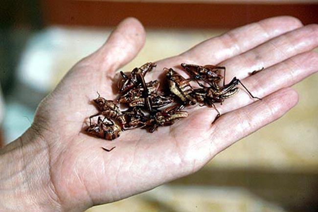grasshopper_hand