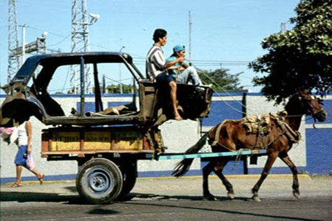 horse_car