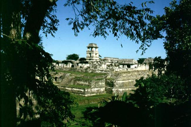palenque_trees