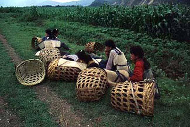 Tea pickers near Dali in China