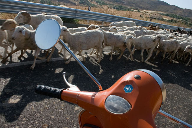 central_sicily_marcello_sheep_2