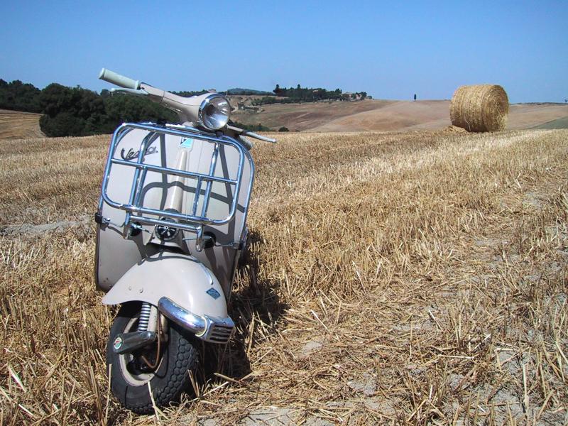 Sophia in a field near Massa Marittima